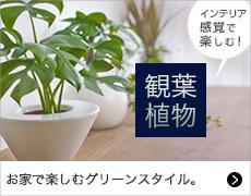 インテリア感覚で楽しむ!観葉植物