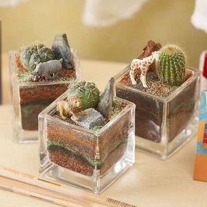 ちいさな植物と一緒に楽しむジオラマ「サバンナのライオンたち」ミニサイズ3個セットの商品画像