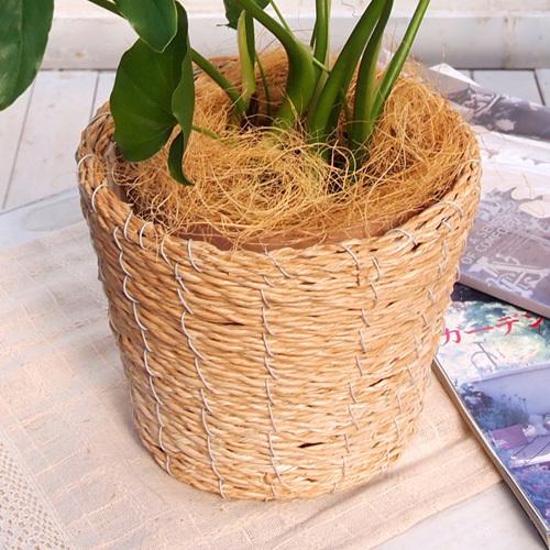 観葉植物「セローム・バスケット」