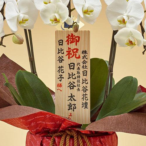 ゴールド「胡蝶蘭(ホワイト)3本立ち」