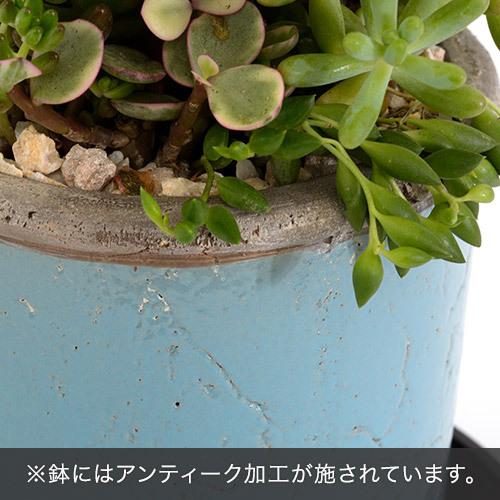 多肉植物寄せ植え「アンティークポット・ブルー」