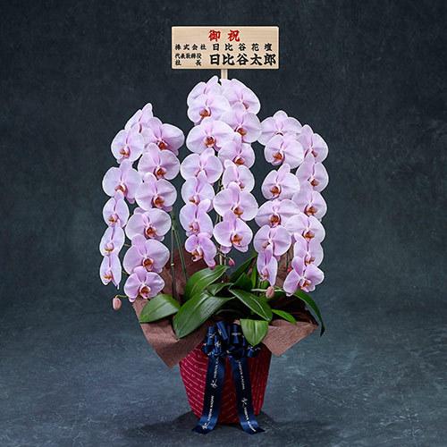手渡し配達のプレミアム胡蝶蘭(ピンク)3本立ち【東京都内エリア限定】