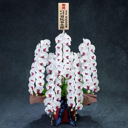 手渡し配達のプレミアム胡蝶蘭(赤リップ)5本立ち【東京都内エリア限定】