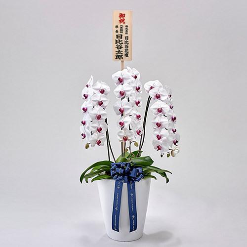 器の高さにこだわった胡蝶蘭(赤リップ)3本立ち【東京都内エリア限定】