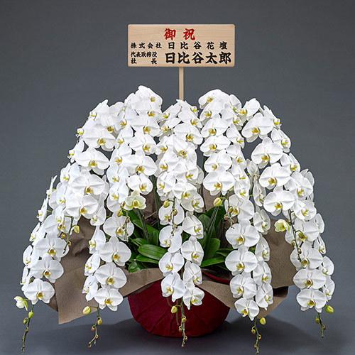 10本立ち胡蝶蘭(白) 120輪以上(つぼみ含む)【東京都内エリア限定】