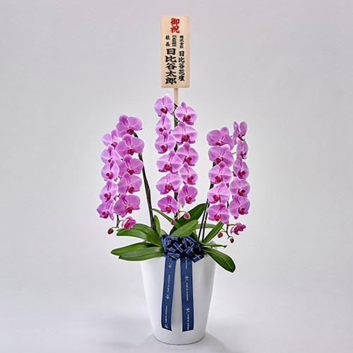 器の高さにこだわった胡蝶蘭(ピンク)3本立ち【大阪市内エリア限定】
