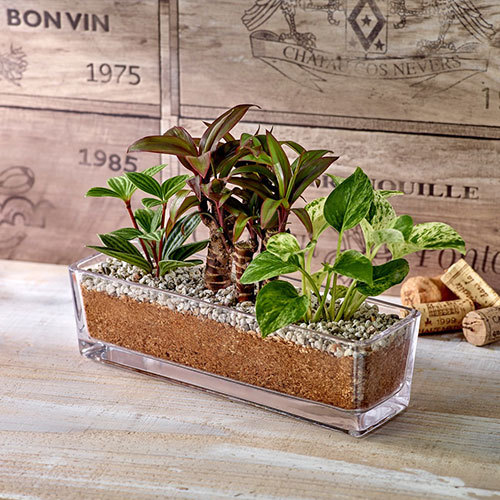 環境にやさしいエコスギ観葉植物「ポトス・コルジリネ・ペペロミア寄せ植え」