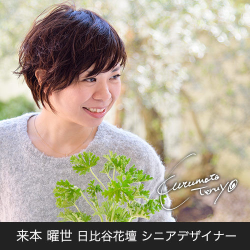 胡蝶蘭「日比谷花壇デザイナーズ化粧蘭(NANTEN)」