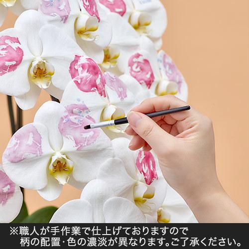 胡蝶蘭「日比谷花壇デザイナーズ化粧蘭(AKI)」