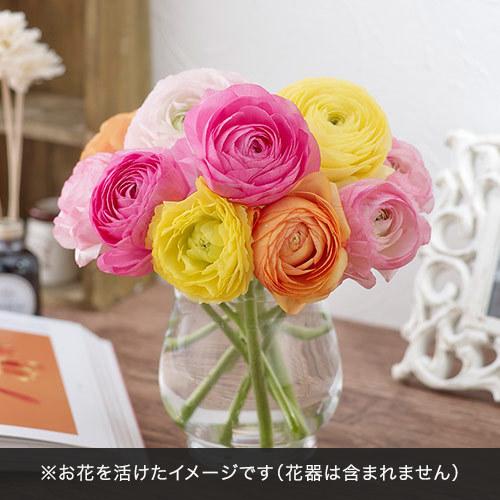 おうちで楽しむ季節の花「ラナンキュラス ミックス」