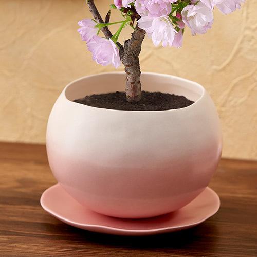 桜の小鉢「旭山」オリジナル陶器鉢