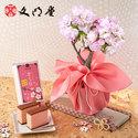 桜の小鉢「旭山」4号と文明堂「さくらカステラ」のセット
