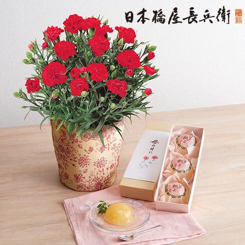 【日比谷花壇】母の日 日本橋屋長兵衛「江戸桃よ」とカーネーション鉢のセット