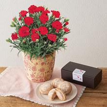 母の日 ヒビヤカダンスイーツ「バラ香るローズブッセ」とカーネーション鉢のセット