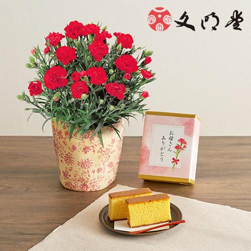 【日比谷花壇】母の日 文明堂「特撰五三カステラ」とカーネーション鉢のセット