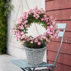 季節の花鉢 リング仕立てつるバラ「真珠貝」