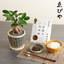 父の日 ゑびや商店「松阪牛肉味噌」とガジュマルのセット