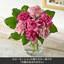 旬の花材「カーネーション ピンク系 ミックス」