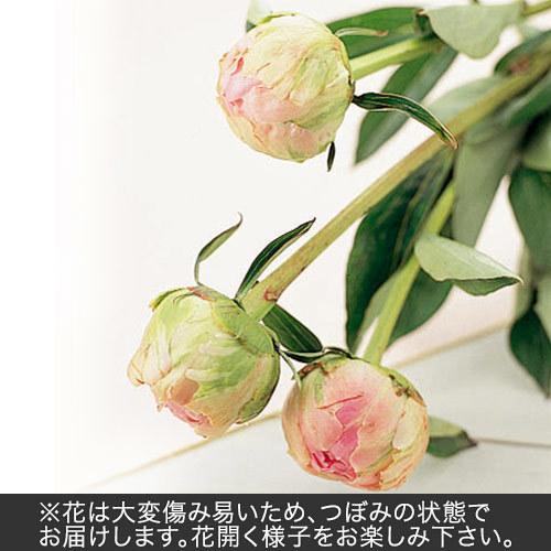 おうちで楽しむ季節の花「芍薬(淡いピンク系)」7本