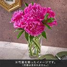 おうちで楽しむ季節の花「芍薬(濃いピンク系)」7本