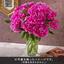 おうちで楽しむ季節の花「芍薬(濃いピンク系)」12本