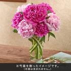 おうちで楽しむ季節の花「芍薬(ピンク系ミックス)」7本