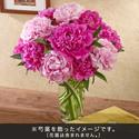 おうちで楽しむ季節の花「芍薬(ピンク系ミックス)」12本