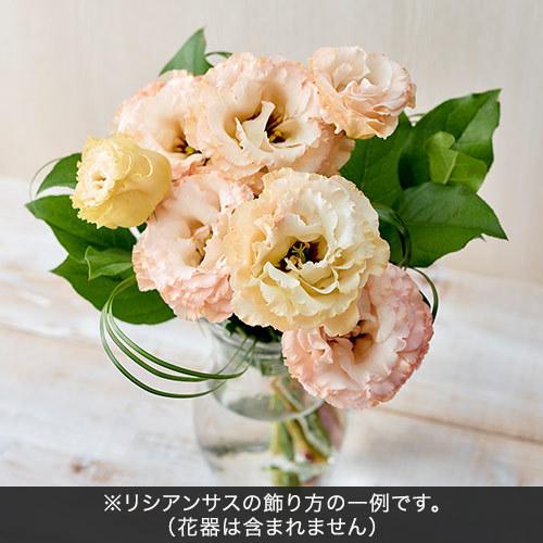 【日比谷花壇】6月旬の花材「リシアンサス オレンジ系」