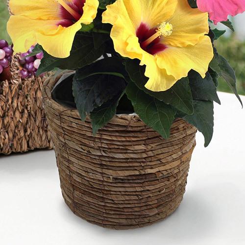 季節の花鉢 ハイビスカス「トロピカル」