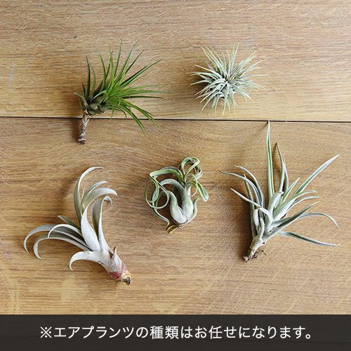 URBAN GREEN MAKERS ハーバリウム「サニーデイズ」インテリアセット【沖縄届不可】