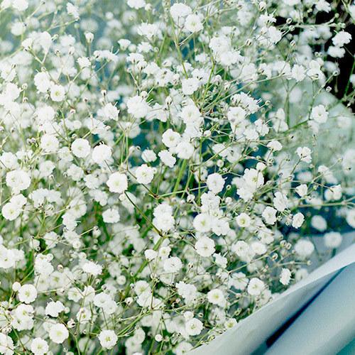 花束「ベイビーズブレス」