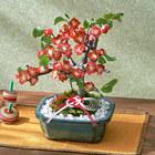 お正月 「木瓜盆栽(赤系)」