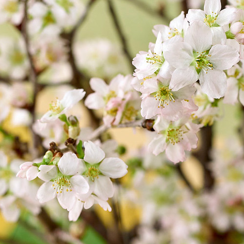 お正月 ボックスフラワー「啓翁桜」