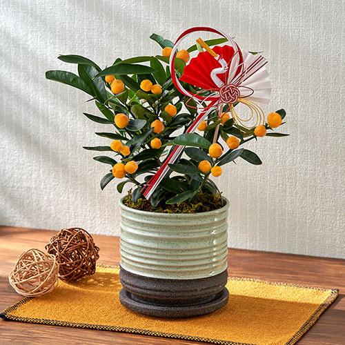 お正月 「金豆(キンヅ)」