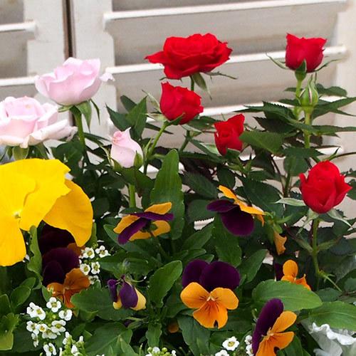 季節の寄せ植え「スプリングナチュラルガーデン」