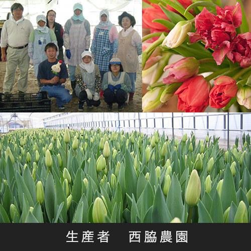 花紀行北陸「チューリップ10本(濃いピンク系)」