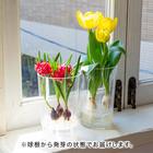 「GlassBulbsキット」チューリップ2種セット