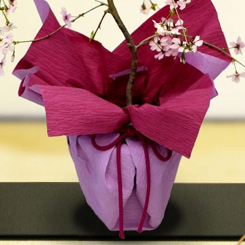 桜鉢「富士しだれ桜」