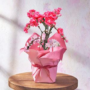 桃鉢「南京花桃」の商品画像