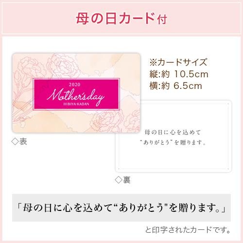 母の日 ミディ胡蝶蘭(ピンク)8本立ち