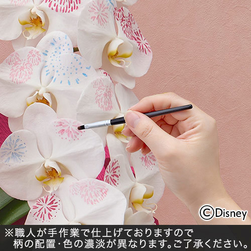 ディズニー ミディ胡蝶蘭「化粧蘭(Minnie)」