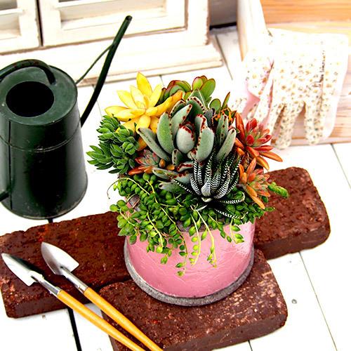多肉植物寄せ植え「アンティークポット」