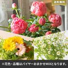 【バイヤー厳選】季節のお花・おまかせミックス(5/23〜6/12お届け)
