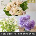 【バイヤー厳選】季節のお花・おまかせミックス(6/22〜6/28お届け)