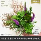 【バイヤー厳選】ボタニカルグリーンセット(6/15〜6/21お届け)