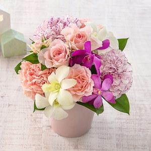 8月の旬の花 アレンジメント「マリークレール」の商品画像