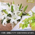 【バイヤー厳選】季節のお花・おまかせミックスL(7/6〜7/12お届け)
