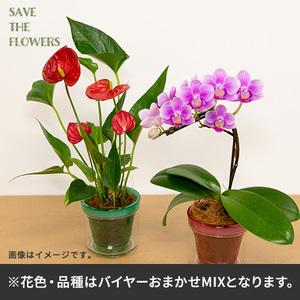 【バイヤー厳選】花鉢2鉢セット