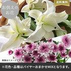【バイヤー厳選】お供えのお花おまかせミックス