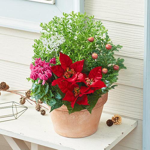 季節の寄せ植え「ウインター フォレスト」